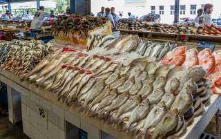 استقرار أسعار الأسماك بالأسواق اليوم