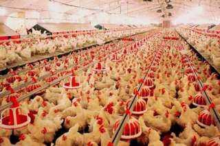 تراجع أسعار اللحوم البيضاء بالأسواق المحلية