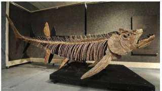 عمرها 70 مليون سنة.. معلومات عن السمكة التى حيرت العلماء