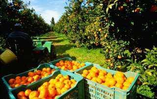 وزير الزراعة: 1.3 مليون طن إجمالي صادرات الموالح