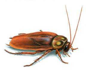 عادي خالص..قائمة بالأطعمة المسموح  بوجود حشرات بداخلها