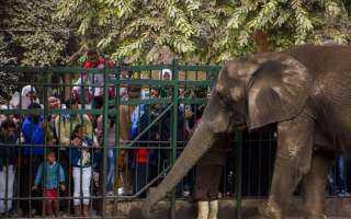 حديقة حيوان الجيزة تستعد لاستقبال الزائرين
