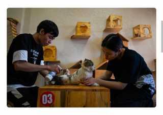 آخر تقاليع كورونا.. مقهى مخصص للقطط لتناول القهوة