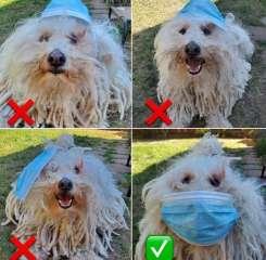 ما هىالطريقة الصحيحة لارتداء الكمامة؟..كلب زوكربيرج يجيب