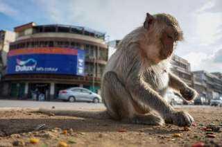 """سويسرا تدخل التاريخ  : استفتاء علي دستور يمنح """"القرود """" نفس حقوق البشر"""