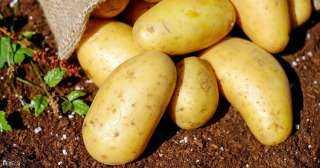بعد زراعة أول محصول من البطاطس.. هذه قائمة طعام رواد الفضاء على المريخ