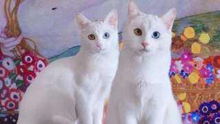 بـ 6 أصابع وعيون مختلفة.. معلومات لا تعرفها عن أشهر قطة على السوشيال ميديا
