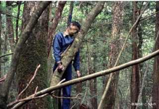 «أوكيجاهارا» اليابانية.. حقائق صادمة وغير متوقعة عن غابة الانتحار