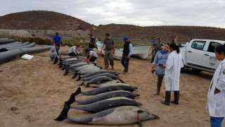 واقعة لا تفسير لها حتى الآن.. معلومات وأسرار عن قصة انتحار الدلافين حول العالم