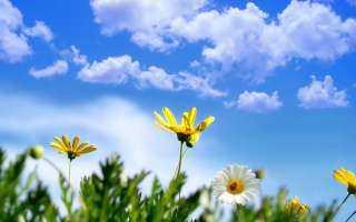 الأرصاد: طقس الغد معتدل والعظمى بالقاهرة 28 درجة