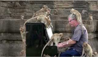 آخر تقاليع كورونا.. نجم روك لمئات القرود البرية الجائعة