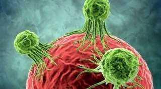 علماء إسرائيليون يبتكرون تقنية لتدمير الخلايا السرطانية في الفئران