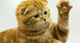 رجل أعمال يدفع غرامة بالآلاف والسبب كسر مخلب قطة