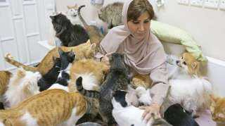 سيدة عربية تتبني 500 قطة وكلب من الشارع.. إنهم أكثر وفاءاً من البشر