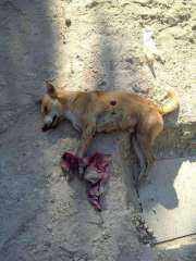 قانون يسمح بقتل كلاب الشوارع بسبب خطورتها علي المواطنين.. وحقوق الحيوان تعترض