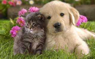الكلاب والقطط ..فتاوى تثير الجدل بين العلماء