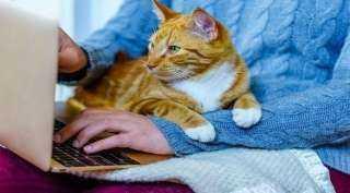 دراسة: العمل من المنزل كله فوائد.. بشرط وجود حيوان أليف معك