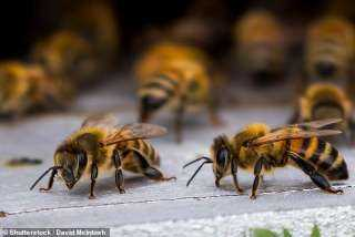 دراسة: المبيدات الزراعية تحرم النحل من النوم وتقتل الملايين منهم