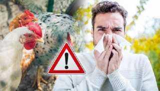 عاجل.. منظمة الصحة العالمية تفجر كارثة بشأن انتقال أنفلونزا الطيور إلى البشر
