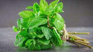 النعناع الأخضر.. الحل السحري لتقوية المناعة