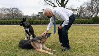 """بايدن مكتئب ..أزمة كبري في البيت الأبيض بسبب """"كلب """""""