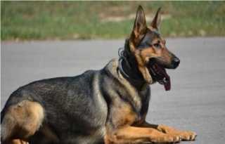 ضبط شخص قام بالتعدى على كلب بالضرب حتى فارق الحياة