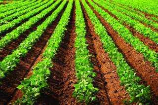 الإحصاء: 10 مليار جنيه حجم القـروض الاستثمـارية متوسطة الأجل الممنوحة للمـزارعيـن  عـام 2019 / 2020