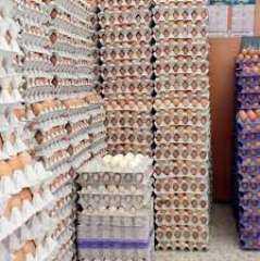 بورصة الأسعار| استقرار سعر كرتونة البيض عند 46 جنيها فى المزرعة