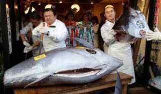 «مهددة بالإنقراض».. كل ما تريد معرفته عن أغلى سمكة بالعالم