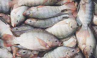 تعرف على أسعار الأسماك اليوم
